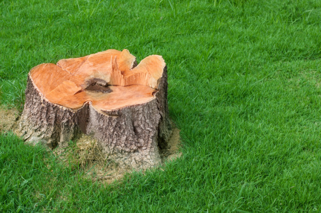 Professional stump removal service