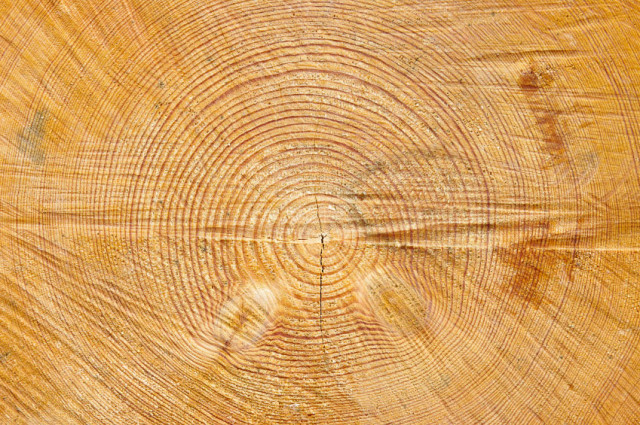 $129.00 STUMP REMOVAL SPECIAL!