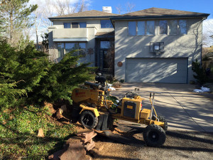 Stump grinder doing stump grinding or stump removal in Boulder Colorado