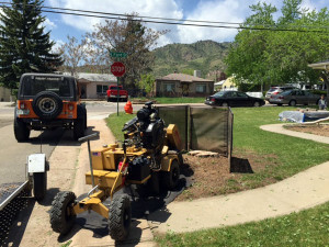 Stump removal in Golden Colorado